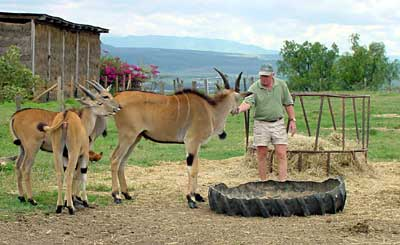 Simon, Boomerang and two young eland